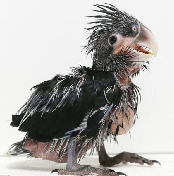 (2) najgrdata ptica na svetot koja istovremeno e neodoliva-www.kafepauza
