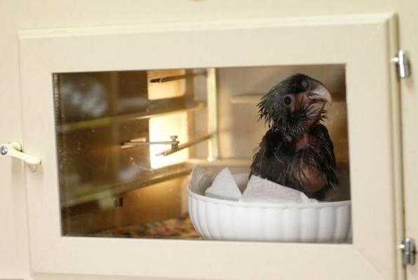 (3) najgrdata ptica na svetot koja istovremeno e neodoliva-www.kafepauza