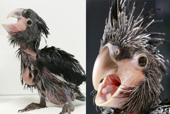 (4) najgrdata ptica na svetot koja istovremeno e neodoliva-www.kafepauza