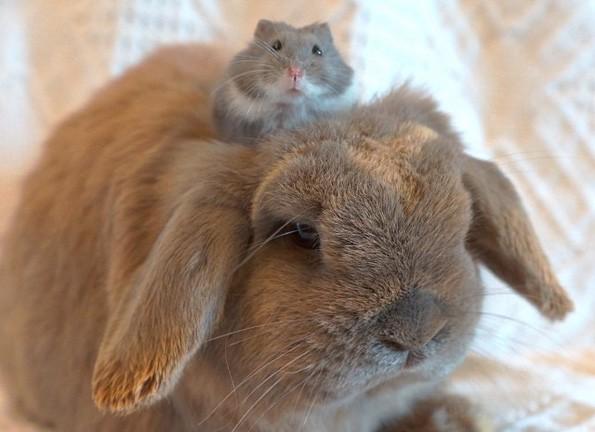 Најинтересните животински фотографии на Инстаграм за оваа година