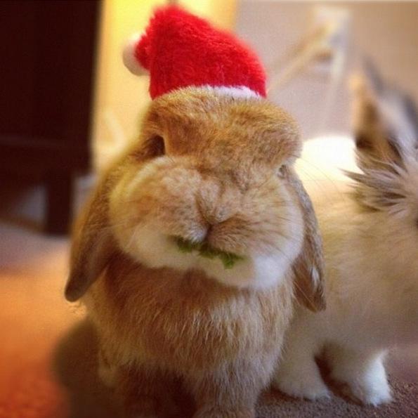 Најслаткото и најнеодоливото зајче на Инстаграм