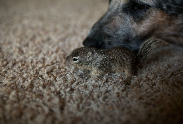 Прекрасен човек спасил мала верверичка од смрзнување