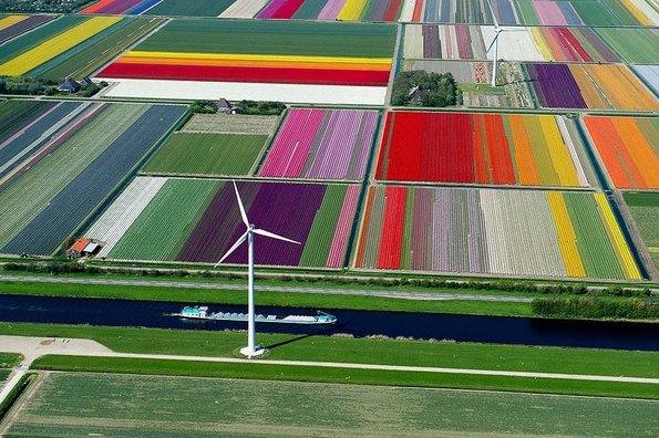 Полиња со лалиња, Холандија