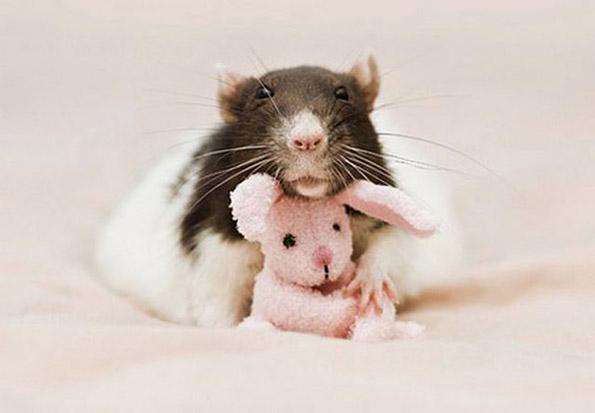 Фотографии од слатки глувчиња гушнати со плишани мечиња