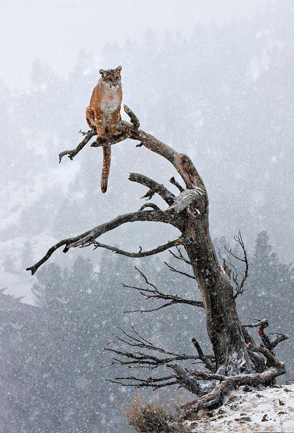 Животните и зимската идила