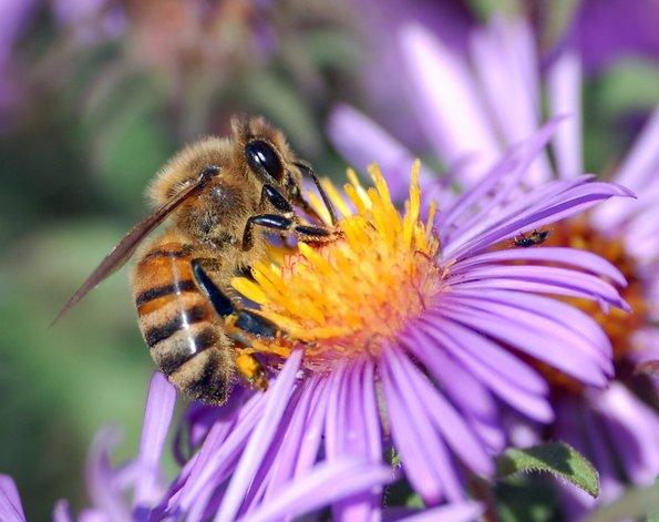 5 животни кои можат да намирисаат болести