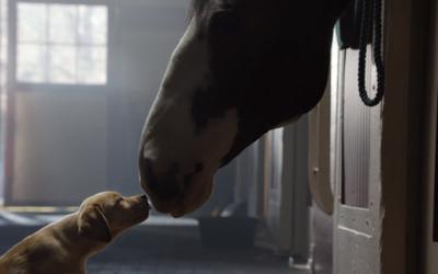 """Рекламата на """"Бадвајзер"""" за Супер Боул која го расплака светот"""