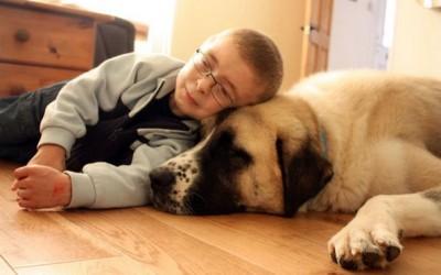 Приказна која ќе ве расплаче – болно дете и куче со три нозе се најдобри другари