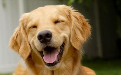 10 кучешки заповеди: препораки од кучињата за сите сегашни и идни сопственици