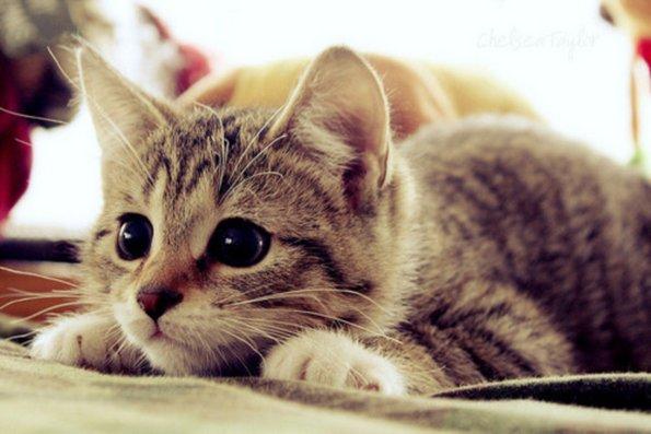 Зошто да чувате мачка?
