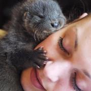 Сега и вие посакувате да сте нечија перница :)