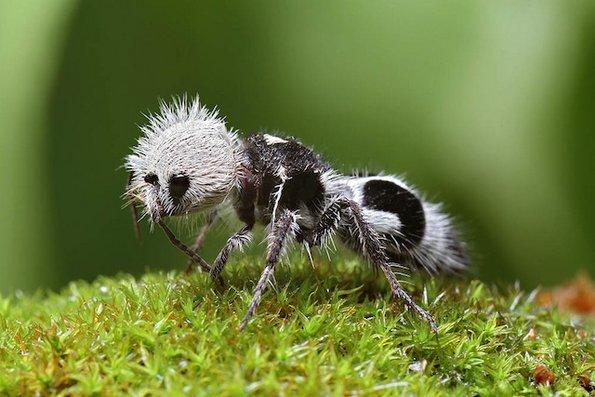 10 чудни животни кои навистина живеат на оваа планета