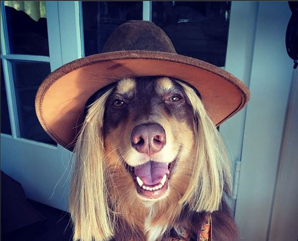 Најдобро облечените животни на Инстаграм