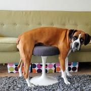 Животни кои ја изгубиле битката со мебелот во домот
