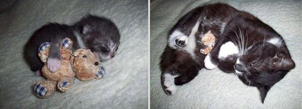 Пред и потоа фотографии од домашни миленичиња кои пораснале
