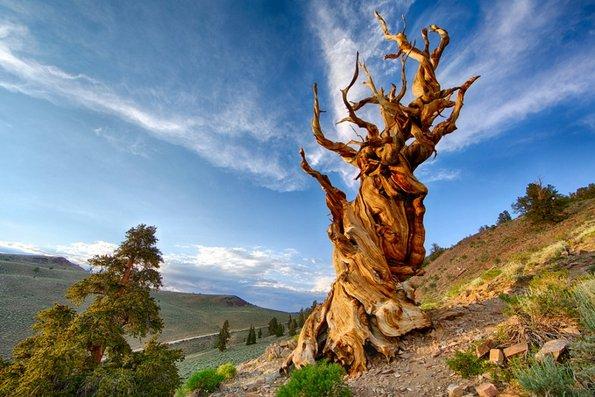 10 лекции за животот на кои нѐ учи природата