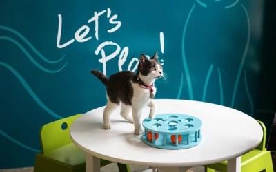 Кафуле во Њујорк – рај за љубителите на мачки