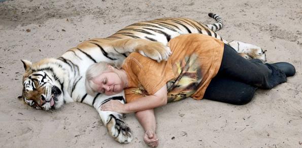 Жената која чува разиграни и мили тигри како домашни миленичиња