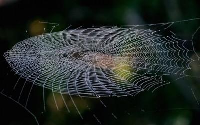 Совршената симетрија на пајаковите мрежи