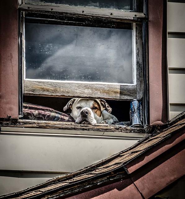 Кога животните гледаат низ прозорецот...