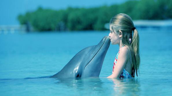 7 интересни факти за делфините