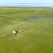 Плажата со зелен песок во Француска Гвинеја (1)