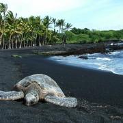 Плажата со црн песок Пуналу на Хаваите (1)