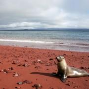Плажата со црвен песок во Рабида, Галапагос (2)