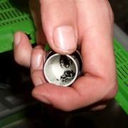 Жаби во кутиче од филм за апарат