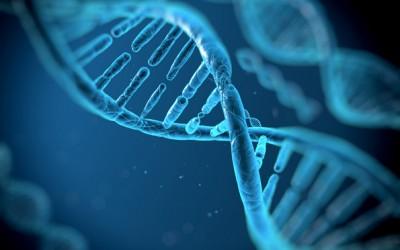 Начинот на кој сеќавањата генетски се пренесуваат од една генерација на друга