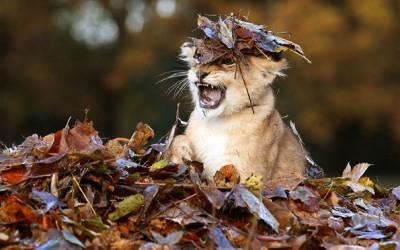 Животните и есенската магија