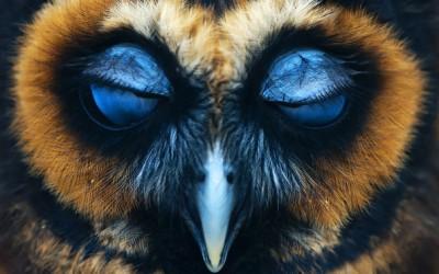 Величествени бувови овековечени во неверојатни фотографии