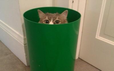 Животни кои не знаат да се кријат