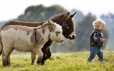 13 факти за магаренцата поради кои ќе посакате едно и за вас