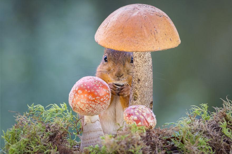 Фотограф мами верверички во својот двор и прави прекрсни фотографии од нив