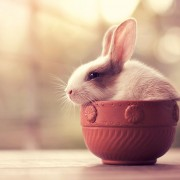 Чај од зајче