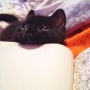 А оваа мачка пак, обожава да гризе книги.