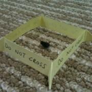 Кога ќе убиете бубачка на подот и не ја фрлате затоа што страв ви е да ја допрете