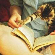 Оваа мачка навистина сака да знае што ќе се случи следно.