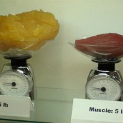 2,26 килограми (5 фунти) телесни масти наспроти исто толку мускули