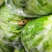 Исплашете ги купувачите во супермаркет