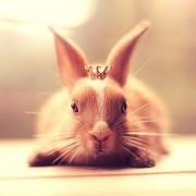 Јас сум кралицата