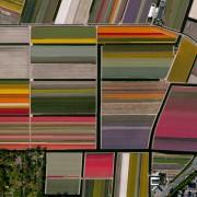 19. Посеви со лале – Лиса, Холандија
