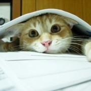 Заврши со учење?