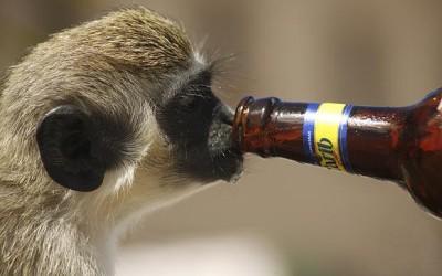 5 човечки работи кои животните ги прават кога се пијани