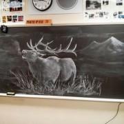 Професор црта воодушевувачки цртежи со креда на табла (1)