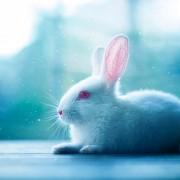 Заледено зајче