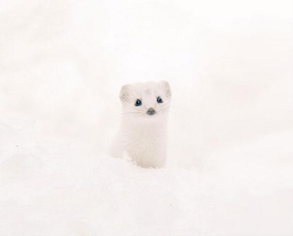 7 најслатки животни кои живеат на јапонскиот остров Хокаидо