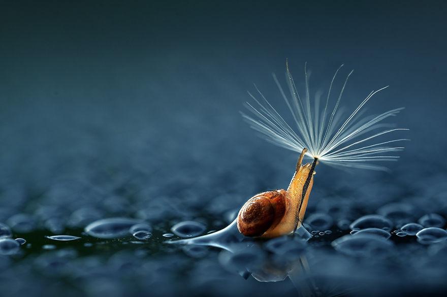 (1) Неодоливи животни со природни чадорчиња