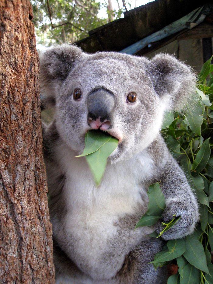 (1) Животни кои се многу изненадени од она што го гледаат пред себе